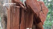 Khởi tố vụ án, tạm giam 3 đối tượng phá rừng Vườn Quốc gia Pù Mát