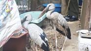 Nam thanh niên Nghệ An mua 2 con chim lạ, quý hiếm tặng cho Vườn Quốc gia Pù Mát