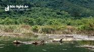 UBND huyện Quế Phong yêu cầu 8 nhà máy thủy điện thu dọn rác lòng hồ