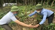 UBND tỉnh giao huyện Quỳ Hợp kiểm tra, xác minh vụ việc hủy hoại rừng ở Bắc Sơn