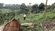 Không khởi tố vụ phá rừng ở xã Bắc Sơn?!!!