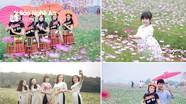 Cánh đồng hoa tam giác mạch, cánh bướm ở Nghệ An nhộn nhịp trong ngày đầu đón khách