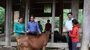 Hỗ trợ bò giống cho người nghèo Kỳ Sơn
