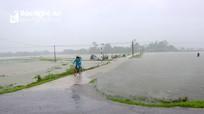 Nghệ An: Hàng ngàn ha lúa hè thu ngập sâu do mưa lớn