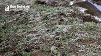 Thành phố Vinh: Nhiều cánh đồng rau bị xóa sổ, giá tăng mạnh sau bão