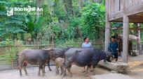 Nghệ An: Sử dụng 6.000 liều vắc xin và 8 tấn hóa chất khử trùng phòng bệnh cho gia súc