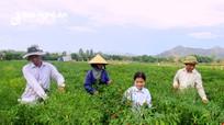 Nghệ An hỗ trợ 17 tỷ đồng mỗi năm cho liên kết sản xuất và tiêu thụ nông sản