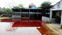 TP Vinh: Dừng hoạt động lò giết mổ gia súc tập trung tại xã Nghi Phú