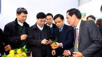 Nghệ An có 883 mặt hàng công, nông nghiệp được cấp bằng sở hữu trí tuệ