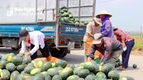 Dưa hấu tăng giá kỷ lục, nông dân Nghệ An trúng đậm