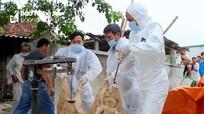 Diễn Châu tiêu hủy gần 1 tấn lợn nhiễm dịch tả lợn châu Phi
