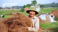 Về nơi người dân đổ xô vào rừng nhặt thứ lá 'quý như vàng' ở Nghệ An