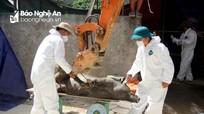 Nam Đàn tiêu hủy gấp đàn lợn tại điểm dịch mới bùng phát