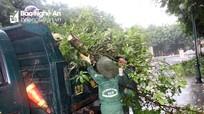 Cắt tỉa 'thần tốc' hàng nghìn cây xanh ở TP Vinh kịp trước giờ bão đổ bộ