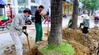 Đào thay toàn bộ cây xanh trên đường Nguyễn Văn Cừ và Hồ Tùng Mậu, lãnh đạo TP.Vinh nói gì?