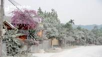 Nghệ An: Nâng cấp quốc lộ, bụi bay mịt mù phủ trắng nhà dân