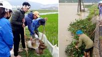 Nghệ An: Xã thu mua đuôi chuột 2.000 đồng, nhà nhà ra đồng diệt chuột