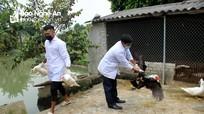 Quỳnh Lưu (Nghệ An) xuất hiện ổ dịch cúm gia cầm thứ 5