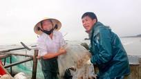 Sứa biển Nghệ An được mùa nhưng rớt giá vì dịch Covid-19