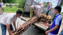 Nghệ An: Nắng nóng, mía giải khát giá tăng kỷ lục vẫn 'cháy hàng'