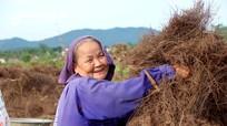 'Đến hẹn', cả làng lại dậy sớm vào rừng săn 'lá vàng' tại Nghệ An