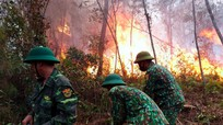 Hàng nghìn người căng mình cứu rừng ở Diễn Châu