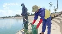 Sau phản ánh của Báo Nghệ An, cá chết tại hồ điều hòa TP Vinh đã được thu gom