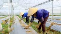 UBND tỉnh Nghệ An phê duyệt Chương trình khuyến nông giai đoạn 2021 - 2025