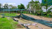Vùng rau nổi tiếng nhất TP.Vinh chưa thể phục hồi sau mưa lụt