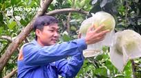 Thanh niên Nghệ An gác bằng đại học vào rừng làm giàu từ trang trại