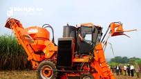 Công ty CP Mía đường Sông Con tăng cường máy thu hoạch mía