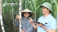 Công ty CP Mía đường Sông Con: Đột phá từ chuyển đổi diện tích đất trồng mía