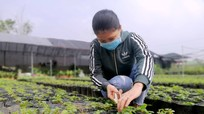 Giá giống tăng cao đột biến, người trồng hoa Nghệ An gặp khó vụ Tết