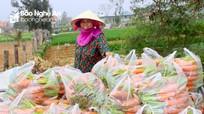Nông dân Nghệ An thu hơn 400 triệu từ 1 héc-ta cà rốt