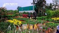 Điểm cho thuê bán cây cảnh Tết tại TP.Vinh tăng giá chóng mặt
