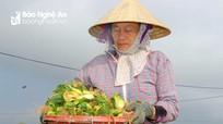 Giá rớt tận đáy, nông dân vựa rau Nghệ An xót xa chặt bỏ ngay tại ruộng