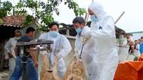 Nghệ An: Dịch tả lợn châu Phi và cúm gia cầm H5N6 tái phát sau Tết