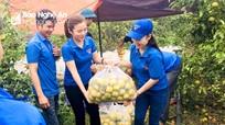 Nghệ An: Tiêu thụ 20 tấn quýt PQ trong ngày đầu tiên 'giải cứu'