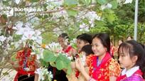 Tinh khôi sắc trắng hoa ban nơi phố núi xứ Nghệ