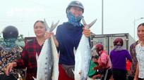 Cảng Cửa Hội đầy ắp cá thu, cá bè... tươi ngon buổi sáng