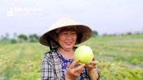 Nghệ An: Đặc sản dưa lê tăng giá, tiêu thụ mạnh trong dịp nghỉ lễ