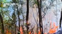 Cháy rừng thông tại Diễn Lộc (Diễn Châu)