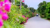 Những con đường quê tuyệt đẹp ở xứ Nghệ vào mùa hè
