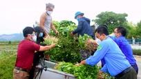 TP Vinh phối hợp doanh nghiệp tiêu thụ rau xanh cho nông dân Nghi Lộc