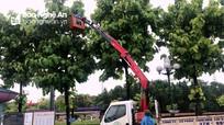 TP. Vinh gấp rút cắt tỉa hàng ngàn cây xanh trước khi bão Conson đổ bộ