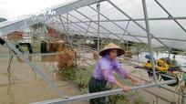 Ao hồ ngập băng, nông dân Nghệ An 'khóc ròng' vì mất trắng tiền tỷ