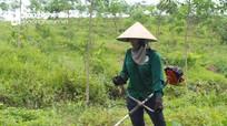 Nghệ An: Tiếp tục rà soát quy hoạch 3 loại rừng