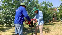 Nghệ An: Tăng diện tích cam, ổi sản xuất theo hướng hữu cơ