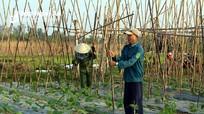Cần chú ý điều gì trong sản xuất vụ đông 2019 ở Nghệ An?