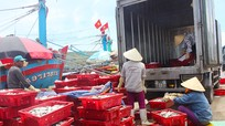 Nghệ An: Khắc phục các khuyến nghị của EC để được gỡ 'Thẻ vàng' trong khai thác hải sản